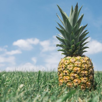 SBR_blog_pineapple_sep2015